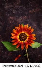 Decorative sunflower on dark grunge background with copy space
