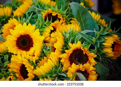 Decorative Sunflowers bunch. Horizontal close up shot