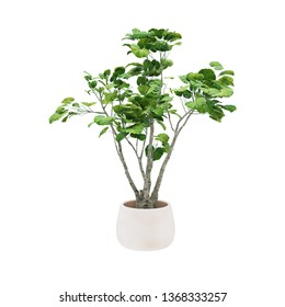 Decorative tree planted white ceramic pot isolated on white background.  - Shutterstock ID 1368333257