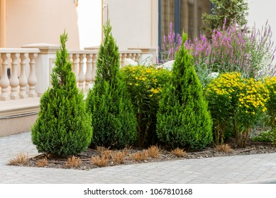 Decorative trees and bushes in the design of the flowerbeds of the landscape in the city
