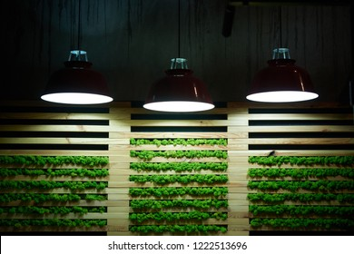 Decorative wall with plants moss indoors