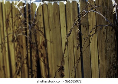 Decrepit Fence with Overgrowth