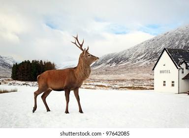 Visit Scotland Images, Stock Photos & Vectors | Shutterstock