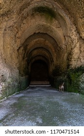 Deep ancient wet roman brick tunnel with gravel and a dog walking inside.