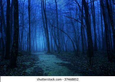 Deep blue foggy forest in spring
