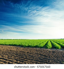 deep blue sky in sunset over agriculture fields