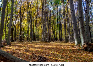 Deep in colorful autumn forest in November, Bratislava, Slovakia