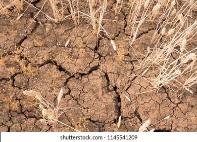 Deep cracks in dry soil during the UK summer heatwave 2018