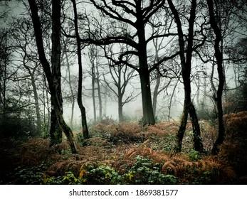 deep dark forest in misty fog