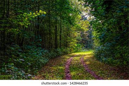 Deep dark forest road landscape. Forest road view. Forrest road scene. Deep dark forest road