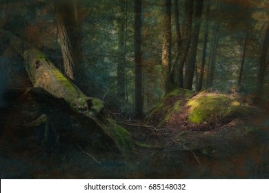 Deep dark green fantasy forest