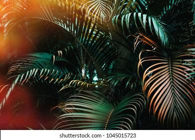 Deep dark green palm leaves pattern with bright orange sun flare effect. Creative layout, toned, horizontal