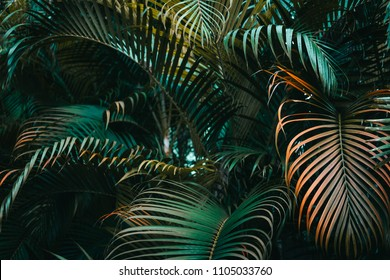Deep dark green palm leaves pattern. Creative layout, horizontal