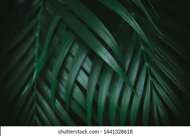 Deep dark green palm leaves pattern. Creative layout, toned image filter effect