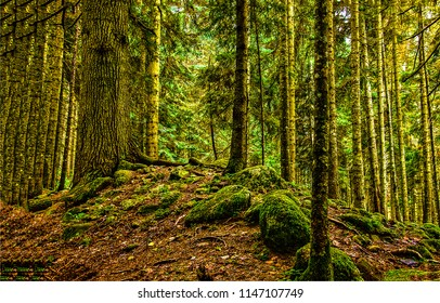 Deep dark mossy forest trees background. Mossy forest scene. Dark forest trees landscape. Forest trees view