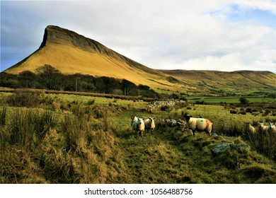 Deep depth of field landscape shot of irish rural scene in County Sligo, Ireland, incorporating Benbulben mountain and curious sheep