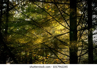Deep forest at autumn