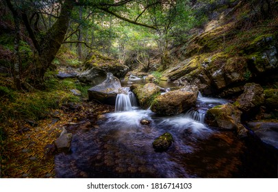 Deep forest cold creek in autumn. Forest creek in autumn. Autumn forest creek. Forest cold creek water