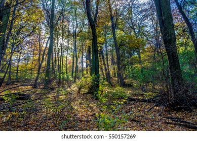 Deep forest part with many wooden barrier, autumn in Slovakia