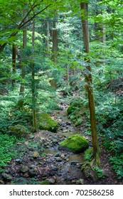 Deep forest river.