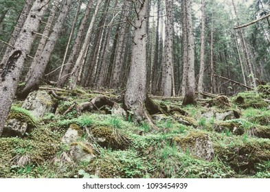 Deep forest roots