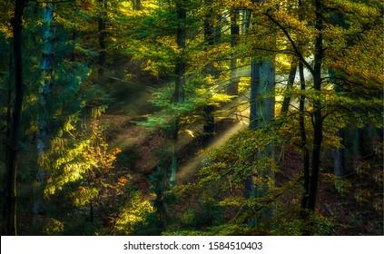 Deep forest sunlight shadows scene. Forest mist shadows. Misty forest sunlight shadows. Sunlight mist forest view