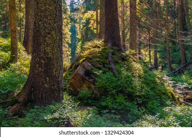 Deep forest. Sunny forest deep in the Carpathian mountains