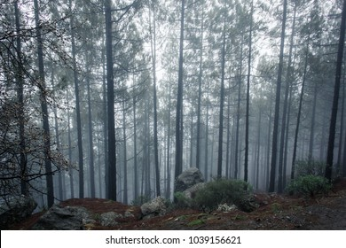Imágenes Fotos De Stock Y Vectores Sobre Misty Forest