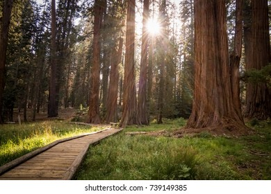 Deep forrest in Sequoia National Park