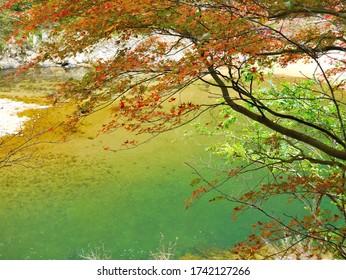 深い緑の澄んだ流れ。  日本