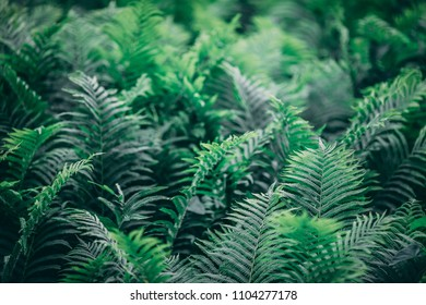 Deep green ferns on the forest floor