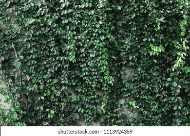 Deep green ferns wall