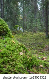 Deep green forest in autumn, Sweden