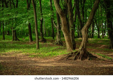 deep green forest peaceful scenic landscape natural environment with big roots picturesque tree and lonely ground trail