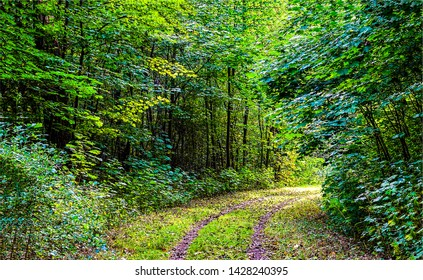 Deep green forest road landscape. Forrest road view. Forest road scene