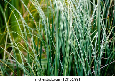 Deep green steppe grass texture colorful image