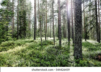 Deep inside a finnish forest