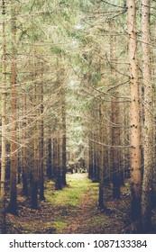 Deep inside of  mysterious czech woods Brdy.