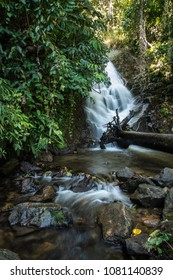 Deep in Inthanon is a big fallen tree trunk extending over the Siripoom Waterfall
