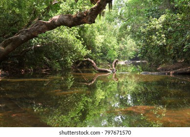Deep into woods. This a landscape photo. Frame contains fresh green trees, still water.