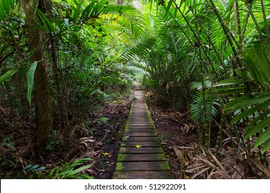 Deep jungle slutted board walkway inside palm tree forest in Bako national park, Malaysia, Borneo