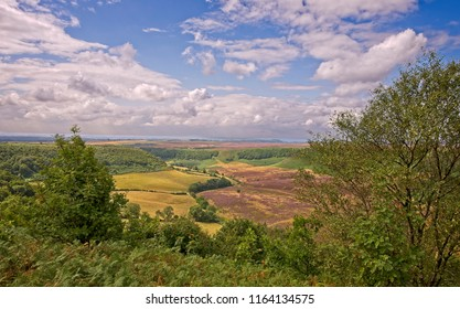 A deep and long valley cut into the North York Moors  The moor stretches out to the horizon and farmland sits on the floor of the valley. Trees and shrubs are in the foreground.