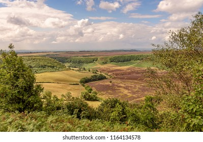 A deep and long valley cut into the North York Moors  The moor stretches out to the horizon and farmland sits on the floor of the valley. Ferns are in the foreground.