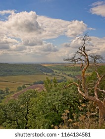 A deep and long valley cut into the North York Moors  The moor stretches out to the horizon and farmland sits on the floor of the valley. A dead tree is in the foreground.