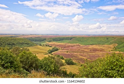 deep and long valley cut into the North York Moors  The moor stretches out to the horizon and farmland sits on the floor of the valley. Ferns are in the foreground.