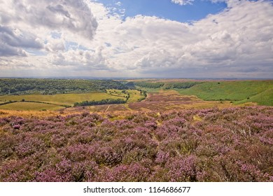 A deep and long valley cut into the North York Moors  The moor stretches out to the horizon and farmland sits on the floor of the valley. Clusters of heather are in the foreground.
