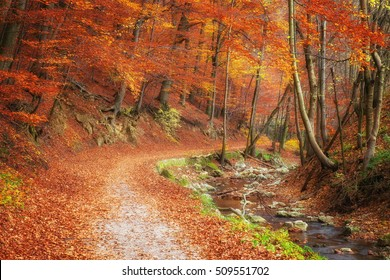 Deep lush autumn forest and small river