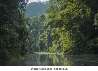 Deep in the Malaysian rain forest