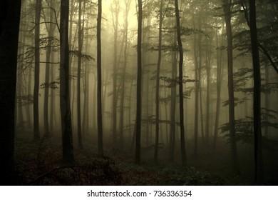 deep misty forest