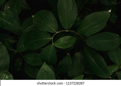 Deep Moody Green Spiral Plant Leaves Background